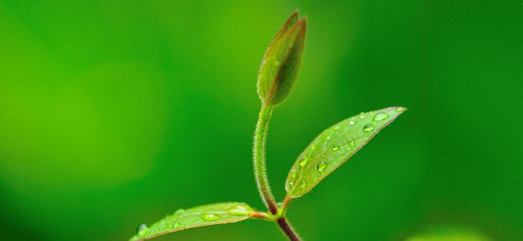 2021 pflanzen wir 300 Bäume in Westafrika